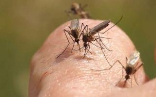 Избавление от зуда после укусов комаров