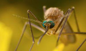 После укуса комара