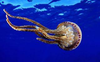 Укус медузы