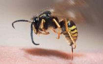 Опухоль от укуса пчелы