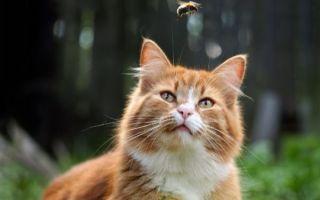 Кошку ужалила оса