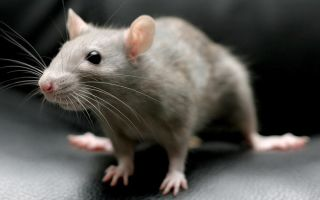 Ультразвук-борьба с мышами