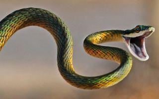 Что делать после укуса змеи