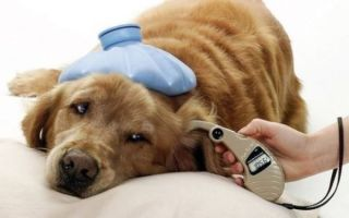 Вакцина после укуса клеща для собаки