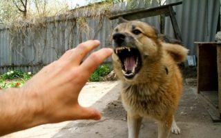 Симптомы бешенства при укусе собаки