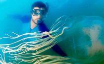 Помощь если ужалила медуза