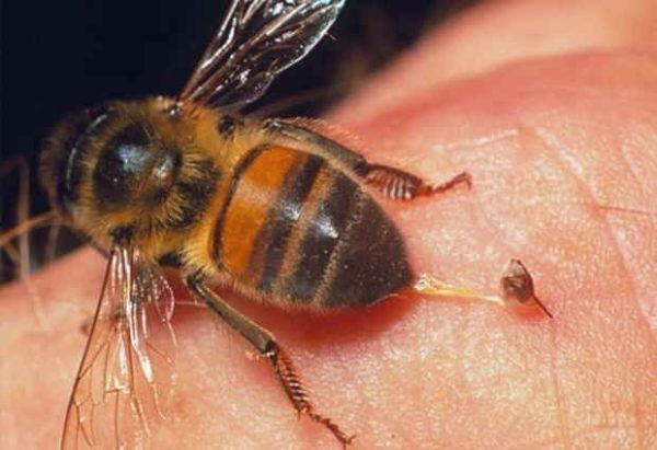 понос после укуса пчелы