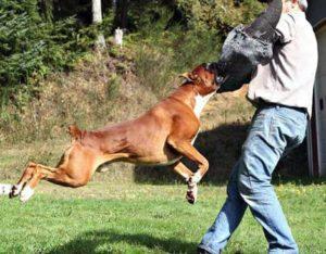 нападение пса