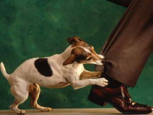 укусил домашний пес