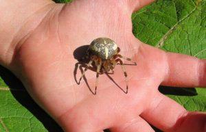 профилактика укуса паука