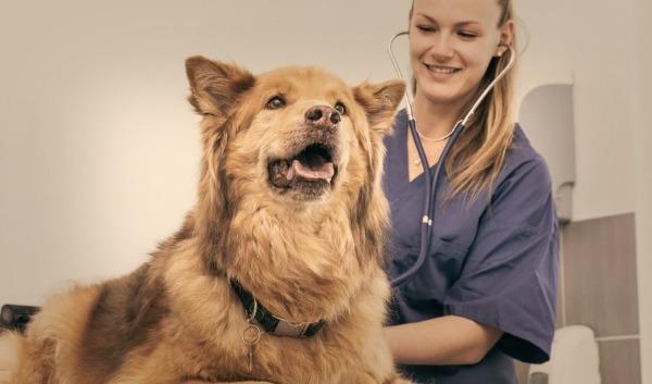 проверка состояния собаки